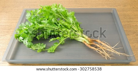 Vegetable and Herb, Fresh Parsley, Chinese Parsley or Coriander for Seasoning in Cooking on A Tray. - stock photo