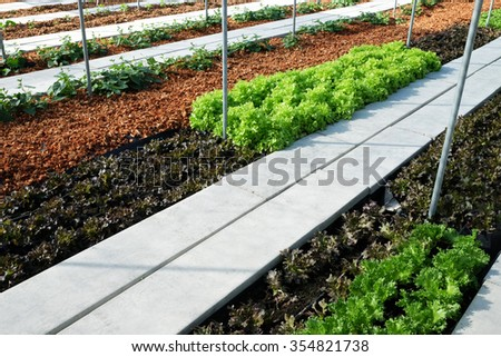 vegetable cultivation and salad