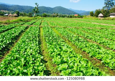 Vegetable garden. - stock photo