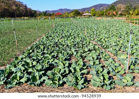 Vegetable garden - stock photo