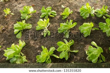 vegetable garden, Agricultural areas - stock photo