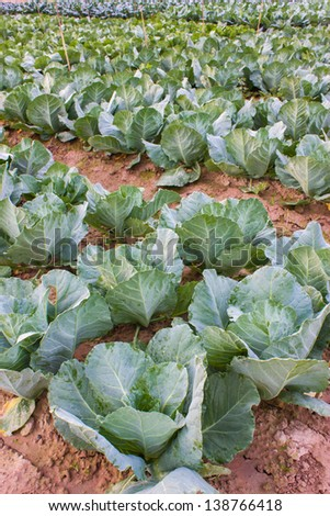 Vegetable garden, asia garden. - stock photo