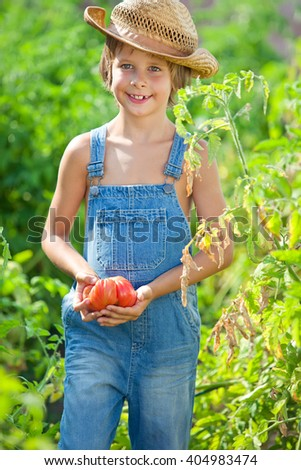 Vegetable garden - beautiful gardener with a bunch of tomatoes - stock photo