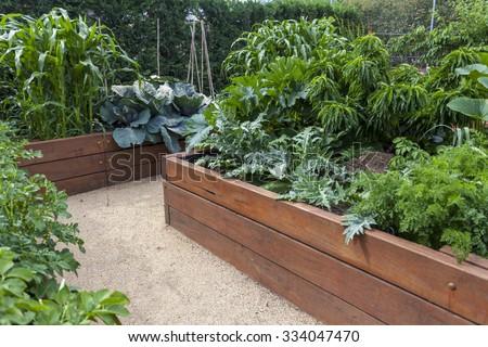 Vegetable garden begs - stock photo