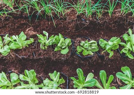 Vegetable GardenGreen Garden Top View In Orgarnic FramVintage Tone