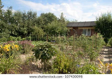 Vegetable garden in front of the cottage. - stock photo