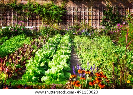 Vegetable Garden In Late Summer. Herbs, Flowers And Vegetables In Backyard  Formal Garden.