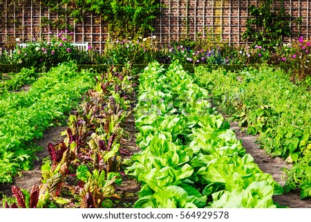 Beautiful herb garden pink raised beds stock photo for Formal vegetable garden design