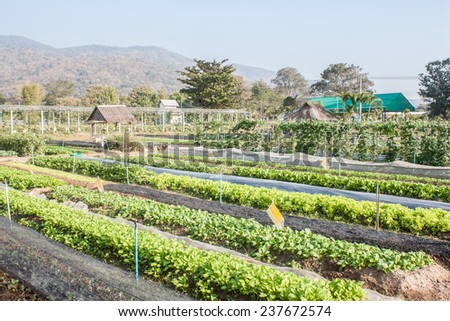 vegetable garden in thailand - stock photo