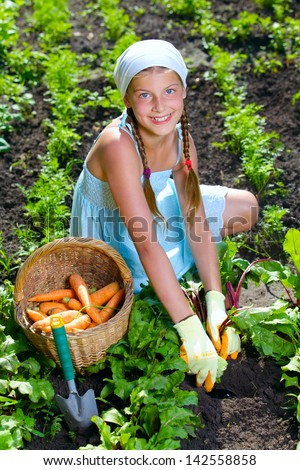 Vegetable garden - little gardener girl collects vegetables in a basket organic carrots and beets