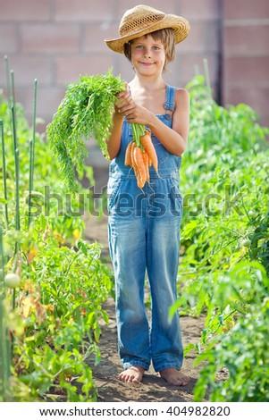 Vegetable garden - lovely gardener with bunch of carrots - stock photo