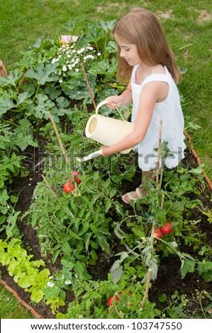 Vegetable garden - lovely girl watering vegetables in the garden - stock photo