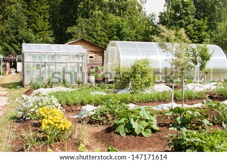 vegetable garden on a suburban area in a sunny day