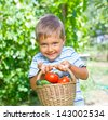 Vegetable garden - portrait of little gardener boy with a basket of organic zucchini and tomatoes - stock photo