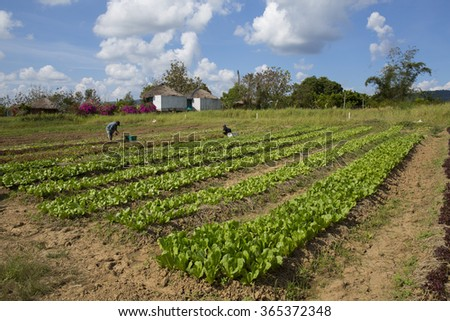 Vegetable garden with blue sky