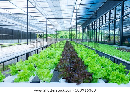 Hydroponics Stock Images Royalty Free Images Vectors Shutterstock