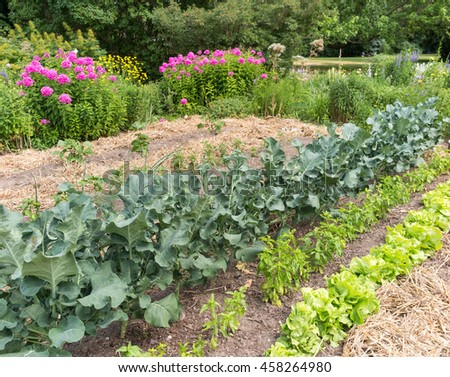 Vegetable garden with leafy greens