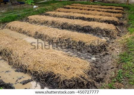 Vegetable Garden With Rice Straw And Wet Brown Soil As Nature Organic Clay