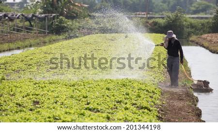 Vegetable gardeners are watering. - stock photo