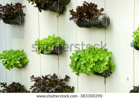 vegetable in decorated vertical garden Idea in the city - stock photo