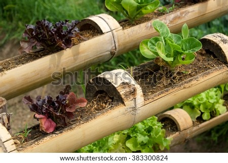 vegetable in decorated vertical garden Idea in the city