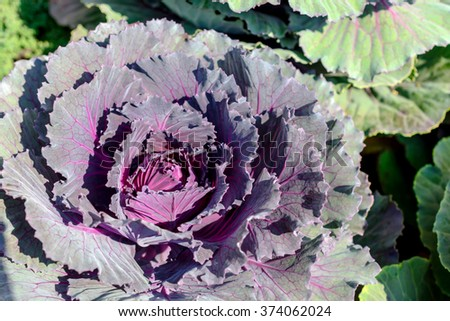 Vegetable in field background - stock photo