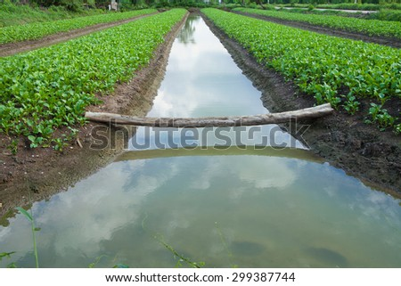 vegetable plot and the area that to prepare for planting vegetable crops - stock photo