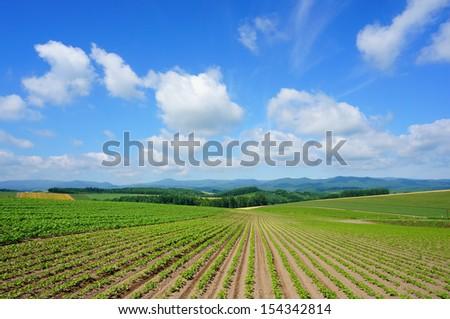 Vegetable plot, north of Japan - stock photo