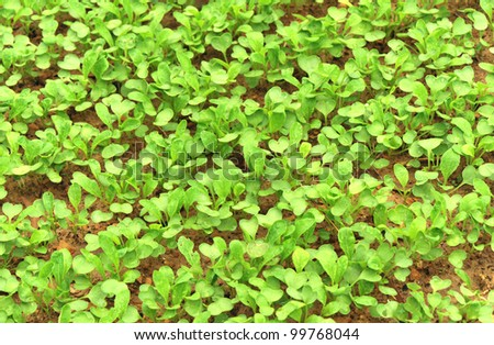 vegetable seeding - stock photo