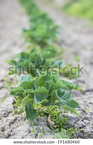 vegetable seedling - stock photo