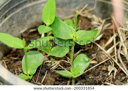 Vegetable seedlings in plastic pots - stock photo