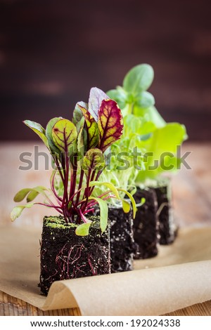 Vegetable seedlings. Selective focus. - stock photo