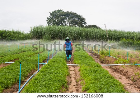 vegetables farm - stock photo