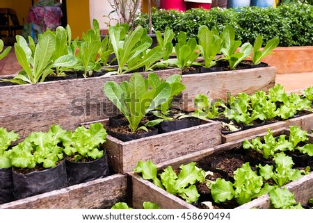 Vegetables garden outdoor.