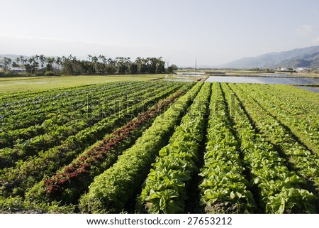 Vegetables growing in a flat bottom valley.  This is rich farmland, also growing is rice and palm trees. - stock photo