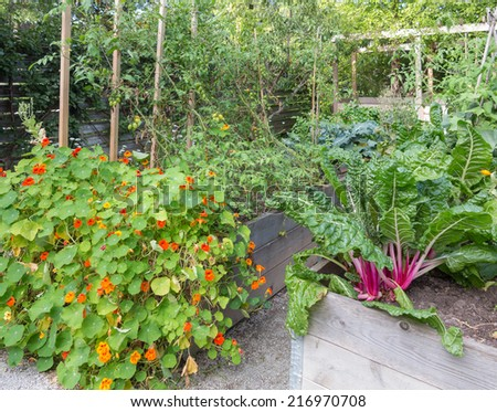 Vegetables growing in raised beds - stock photo