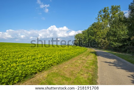 Vegetables growing on a field in summer - stock photo