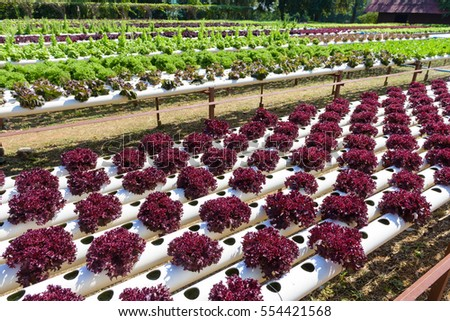 vegetables growing with hydroponic gardening system hydroponic growing uses mineral nutrient solutions to feed the