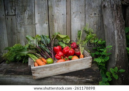 vegetables in a box in the garden - stock photo