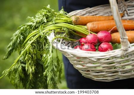 Vegetables in basket - stock photo