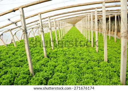 Vegetables in greenhouses