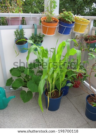 Vegetables in pots on the balcony  - stock photo