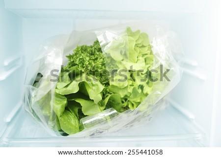 vegetables in the fridge - stock photo
