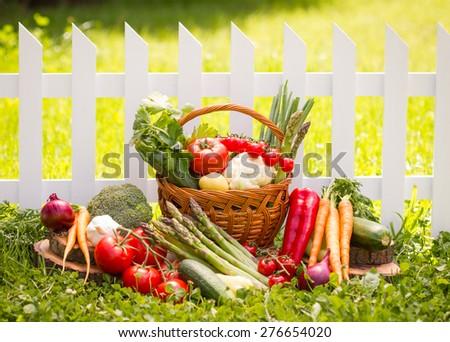 Vegetables in the garden - stock photo