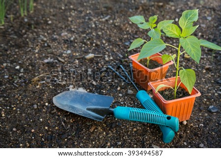 Vegetables ready to be plant in garden photographed with garden tools