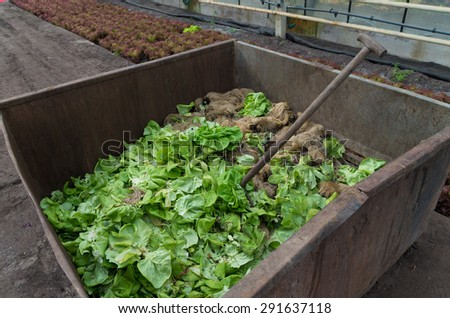 vegetables waste bin in a commercial greenhouse - stock photo