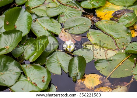 Vegetation on a pond with water lilies