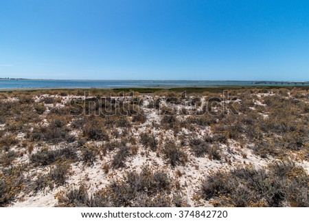 Vegetation on the sand dunes of Ria Formosa marshlands located in the Algarve, Portugal. - stock photo