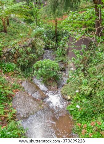 vegetation scenery at a portuguese Island named Madeira - stock photo