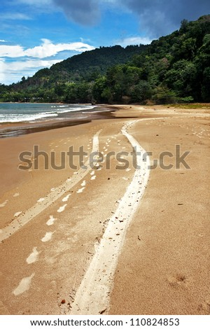 vehicle tracks on a beach in the caribbean (Trinidad, West Indies)